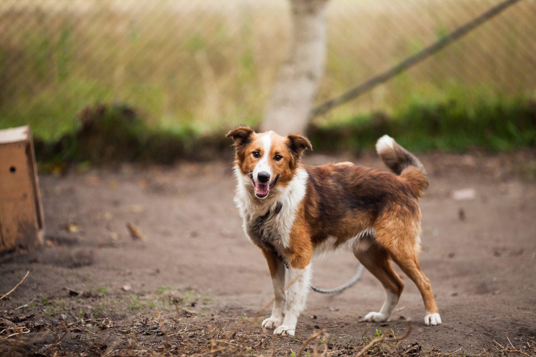 dog-in-yard-animal-shelter