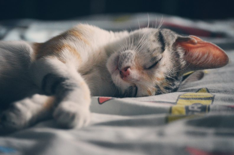 cat-on-bed-sleeping